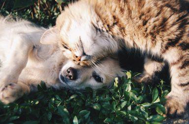 cani o gatti copertina