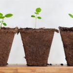 Lead Nurturing: crea contenuti per trasformare un visitatore in cliente